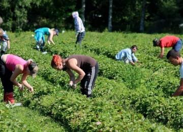 Сезонная работа в Польше: отвечаем на вопросы